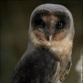 LadyRavenOwl