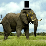 $pudcoin - last post by Elephant Parade